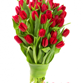 My Love Tulips